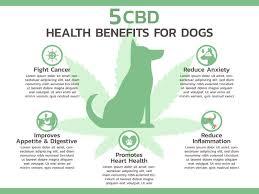 Essential cbd extract for pets - soins de santé   - site officiel - composition - avis