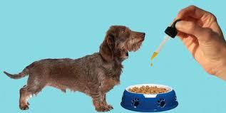 Essential cbd extract for pets - sérum - forum - comprimés