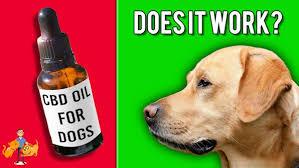Essential cbd extract for pets - soins de santé - Amazon - dangereux – prix